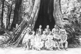 [An unidentified group of workmen in front of the Hollow Tree]