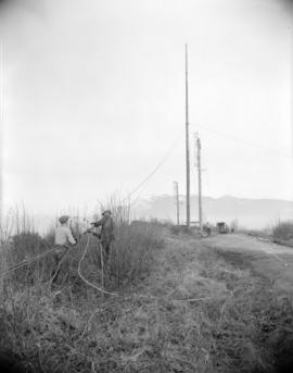 [B.C. Telephone workers installing telephone pole cables]