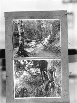 "March weather. ""A woody dell"". Stanley Pk. Vancouver, B.C., March weather. ""A moss..."