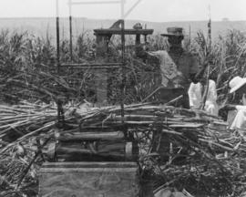Cane cars etc., pressed steel, worker and scientists in sugarcane field