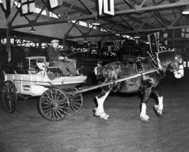 Horse and wagon owned by W. Shepherd of Richmond, B.C.