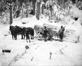 [Men removing logs from horse drawn sleigh]