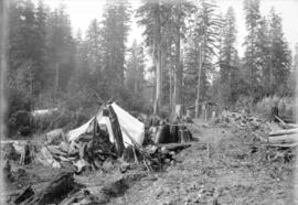 [Small camp in cleared area of forest]