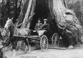 Sam North and wife [Joanna, at Hollow Tree in Stanley Park]