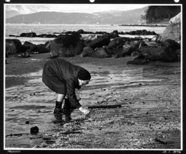 [Elderly woman bending to pick up] mussels [on the beach]