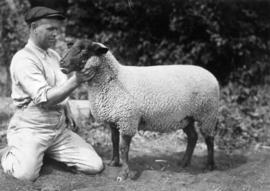 Man with Suffolk ewe in sheep competition