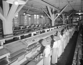 Imperial Canning [production line in the plant]