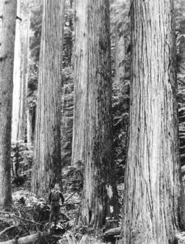 [Trees near Seymour Dam]