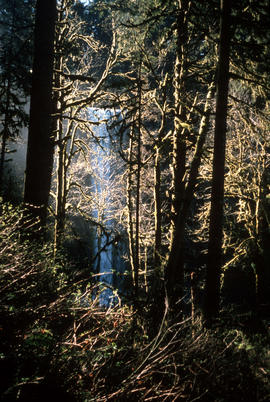 Landscape - general : Silver Falls State Park, Ore[gon]