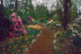 Rhododendron Walk : collection, historical