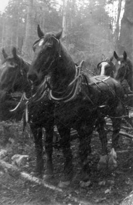 [Logging horses, Port Moody]