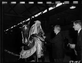 Canadian Prime Minister J.G. Diefenbaker presents ribbon to girl in costume on horseback in P.N.E...