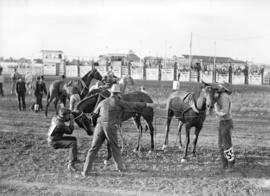 [Cowboys and horses at the Calgary] Stampede