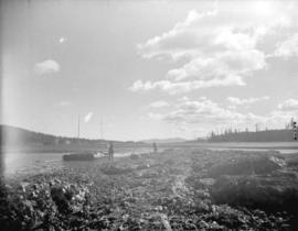 [View of an oyster bed at] Oyster Bay