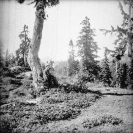 [Man at top of Grouse Mountain near site of chalet]