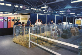 Group looking at cattle in Milk is Marvelous exhibit