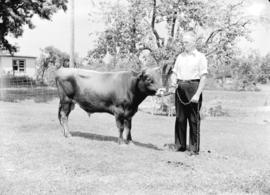Gordon Tufts [standing with jersey cow]