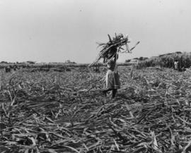 Cane cars etc., pressed steel, woman carrying sugarcane bundle on her head
