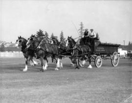 Four-horse team pulling Associated Dairies wagon