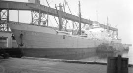 S.S. Julia [at dock, with barges alongside]