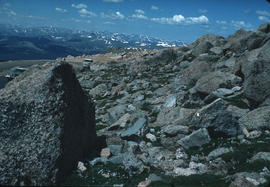 Habitat : M[oun]t Evans Summit Colorado U.S.A.