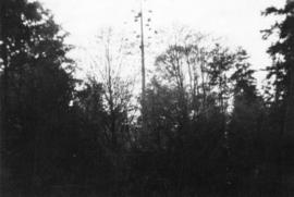 [View of a heron's nest in Stanley Park]
