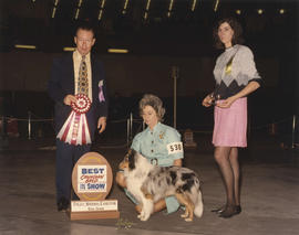 Best Canadian Bred in Show award being presented at 1975 P.N.E. All-Breed Dog Show [Shetland Shee...