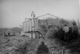 2 Harvesting sugar cane, men and truck in field