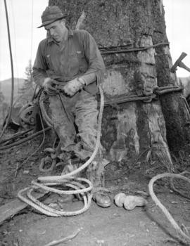 [Logger preparing to be hoisted up a tree trunk for] Pacific Mills [on the] Queen Charlotte Islands