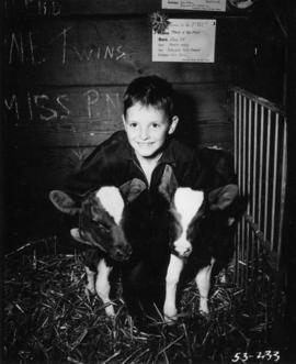 Boy posing with two calves in Livestock building