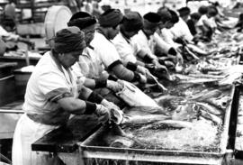 Fresh fish crew, B.C. Packers cannery