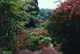 Gardens - United Kingdom : Scotney Castle garden