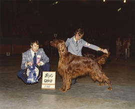 Best in Group [Sporting Group: Irish Setter] award being presented at 1975 P.N.E. All-Breed Dog Show