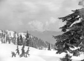 [View of the] top of Mt. Seymour