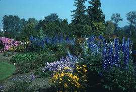 Landscape - bedding and borders : Perennial bed