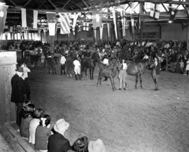 Horse show in Livestock building