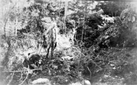 [L.D. Taylor standing in forest]