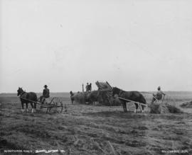 Minnekhada Ranch [Pitt Meadows] - [cutting hay]