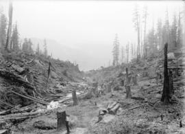[Logs and other debris in partially cleared area near site of Buntzen Lake Power Plant number one]