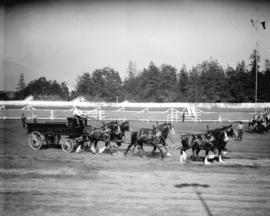 [Mainland Transfer Co. Ltd. wagon and horse team at Vancouver Exhibition]