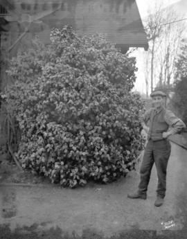 [Man standing by flowering shrub in Stanley Park]