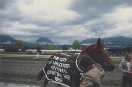 Horse wearing Centennial blanket at Hastings Racecourse for the Centennial Handicap