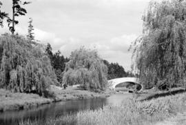 [View of bridge over a stream and weeping willows]
