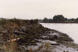 Celtic Slough Fall 1988