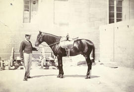 [Unidentified man with a horse]