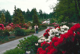 Rhododendron Walk : historical