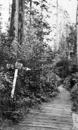 A trail in Stanley Park