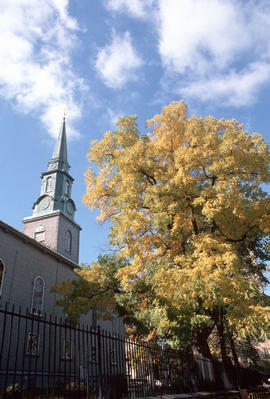Juglans nigra : black walnut, Anglican Church, Quebec City