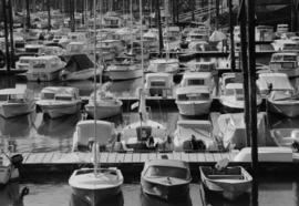 Boats moored at a marina