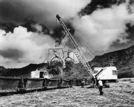 "1 Lihue, Island of Kauai, two P&H loaders powered by ""Caterpillar"" diesel engines l..."